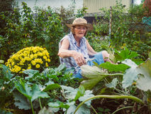 Laughing senior woman gardening among the flower beds Stock Photos