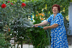 Laughing senior woman irrigating flower garden. Laughing senior woman in colorful dress irrigating flower garden Stock Photos