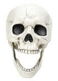 Laughing Skull on White Royalty Free Stock Image
