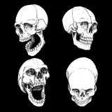 Laughing skulls. And grunge background vector Stock Images