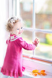 Laughing toddler girl watching out of the window in autumn Stock Photos