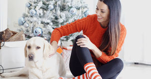 Laughing young woman with her dog at Christmas Stock Photography