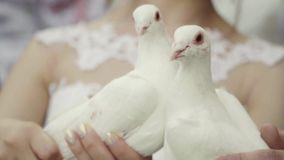 Launching pigeons stock video