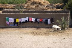 Laundry Drying, Nile River, Egypt Travel. Life in Egypt along the Nile River. A donkey grazes in a small Egyptian village while colorful laundry is out to dry stock image