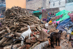 Laundry out to dry on the wood for cremation. Varanasi. Laundry out to dry on the wood for cremation on the street near Harishchandra Ghat. Uttar Pradesh stock photography