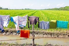 Laundry and rice fields in Myanmar Royalty Free Stock Image