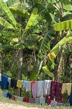 Laundry under banana trees Royalty Free Stock Photography