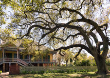 Laura Plantation,  New Orlean. EDITORIAL: Laura Plantation is a restored historic Louisiana Creole plantation on the west bank of the Mississippi River near Stock Image