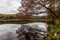 Laurel湖消遣地区在杉木树丛熔炉国家公园我 库存照片