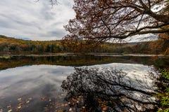 Laurel湖消遣地区在杉木树丛熔炉国家公园我 免版税库存图片