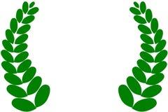 Laurel. An illustration of green laurel Stock Images