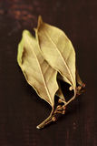 Laurel bay leaves. Stock Photography