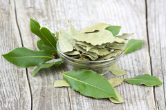 Laurel bay leaves Stock Photography