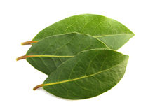 Laurel Bay three leaves Stock Photos
