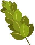 Laurel Branch Royalty Free Stock Image