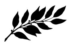 Laurel branch silhouette vector. Laurel branch silhouette. Botanical illustration, a branch of a plant with leaves. Hand drawn liner vector illustration