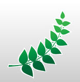 Laurel branch, symbol of victory Stock Photo