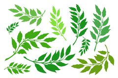 Laurel branches set vector. Laurel branches are a set of different versions of shapes and colors. Vector illustration royalty free illustration