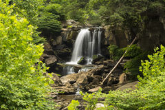 Laurel Creek Falls superiore Immagini Stock