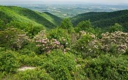 Laurel de montaña, Ridge Mountains azul y Shenandoah Valley - 2 Foto de archivo libre de regalías