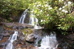 Laurel Falls umgab durch Rhododendron. stockfotos