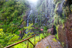 Free Laurel Forest, Lewada Das 25 Fontes And Lewada Do Risco , Madeira Island, Portugal Royalty Free Stock Images - 75995379