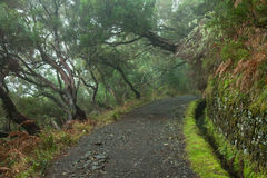 Laurel forest on Madeira Stock Photography