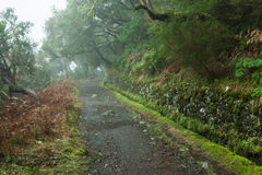 Laurel forest on Madeira Stock Images
