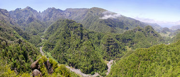Laurel forest on Madeira island, Portugal Royalty Free Stock Photos
