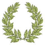 Laurel Green Bay leaf Hand drawn vector illustration. Vintage decorative laurel wreath.. Sketch design elements. Perfect for invitations, greeting cards, quotes Royalty Free Stock Photos