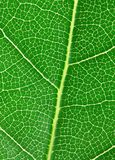 Laurel leaf Stock Photo