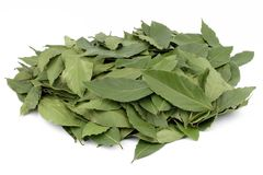 Laurel leaf Stock Images