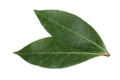 Laurel leaf isolated on white background. Fresh bay leaves. Top view.  stock photo