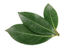Laurel leaf isolated on white background. Fresh bay leaves. Top view.  stock images