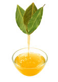 Laurel leaf oil Stock Photography