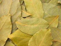 Laurel leafs. An abstract background Royalty Free Stock Photo
