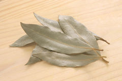 Laurel leaves Royalty Free Stock Photos