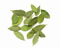 Laurel leaves. Hand pick selected laurel leaves isolated on white Royalty Free Stock Photo