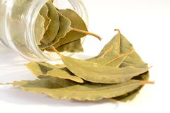 Laurel leaves. Poured from a glass jar.Isolated on white background stock photo