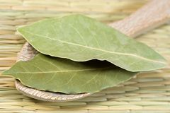 Laurel leaves. On a wooden spoon Royalty Free Stock Photo