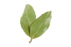 Laurel leaves Stock Photography