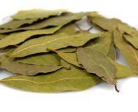Laurel leaves isolated Royalty Free Stock Photos
