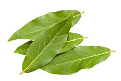 Laurel leaves Stock Images