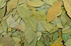Laurel leaves texture Stock Image