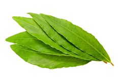 Laurel leaves Stock Image
