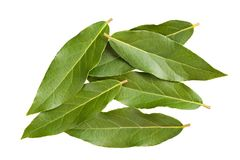 Laurel leaves Royalty Free Stock Photography