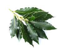 Laurel leaves Stock Photo