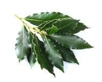 Laurel leaves Stock Photo