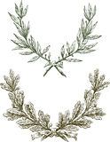 Laurel and oak branches Stock Image