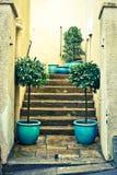 Laurel plants. Pair of laurel plants next to concrete steps royalty free stock image